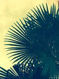 Silhouette of large palm fronds. With light leak effect stock photos