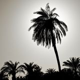 Silhouette of a large palm tree in the back light, photographed on the beach of Aqaba, Jordan Royalty Free Stock Photos
