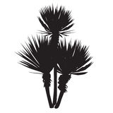 Silhouette of a large plant of a yucca. Yucca filamentosa with three stalks Royalty Free Stock Photos