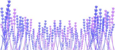 Silhouette of lavender Stock Images