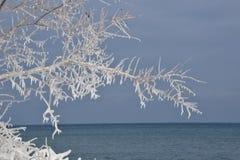 Silhouette le lac Ontario de branche sculptée par glace Images libres de droits