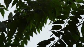 Silhouette leaf blowing from wind in garden while hard rain falling. Silhouette leaf blowing from wind in the garden while hard rain falling stock video