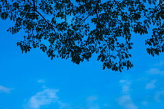 Silhouette leaf foreground with blue sky Stock Photography