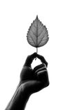 Silhouette of leaf in hand Royalty Free Stock Photo