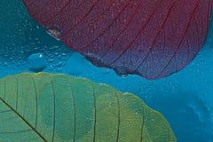 Silhouette leaf three Royalty Free Stock Photo
