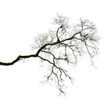 Silhouette of a leafless branch Royalty Free Stock Images