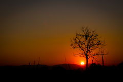 Silhouette leafless tree on red sun in sunset, left copyspace Royalty Free Stock Photography