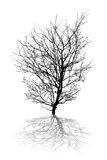 Abstract tree Stock Photos