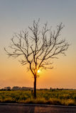 Silhouette Leafless tree at sunset with orange sky in background. Halloween concept royalty free stock image