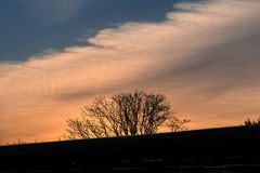 Silhouette of Leafless Tree Under Cloudy Sky Stock Photography