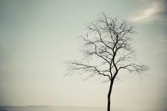 A leafless tree. Silhouette of a leafless tree in vintage tone stock photography