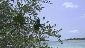 Silhouette of leafy trees against the blue sky. Maldives video. Horizontal stock footage