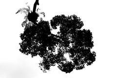 Silhouette leaves Of The Bush isolate on white background Royalty Free Stock Image