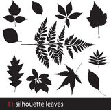 Silhouette leaves Stock Image