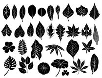 Silhouette leaves set. Silhouette leaves vector set, grape, acacia, fern, maple Royalty Free Stock Photos