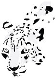 Silhouette of the leopard Stock Images