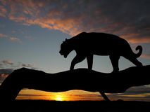 Silhouette of leopard on tree Stock Photos
