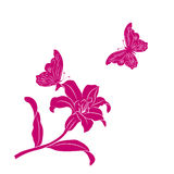 Silhouette Lily and butterfly. Stock Photos