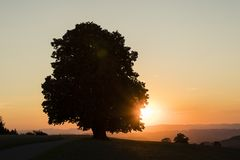 Silhouette of a lime tree standing alone at sunset in Switzerland. Silhouette of a lime tree standing alone at sunset in central Switzerland stock photos