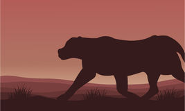 Silhouette of lion alone scenery Royalty Free Stock Photo