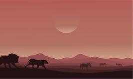 Silhouette of lion family in desert Royalty Free Stock Image
