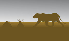 Silhouette of lion in fields Royalty Free Stock Photo