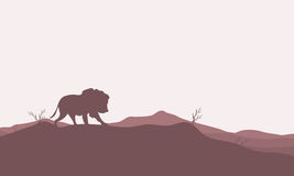 Silhouette of lion in the hills Stock Photos