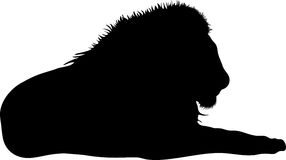 Silhouette of a lion predator Stock Images
