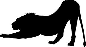 Silhouette of a lion predator Royalty Free Stock Image