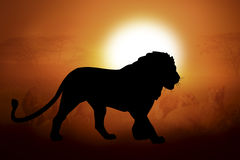 Silhouette of a lion in sunset. Silhouettes lion against the sunset in Africa Stock Images