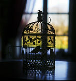 silhouette of the little bird in a cage on the background of the window with curtains Royalty Free Stock Images