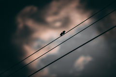 Silhouette of little bird Stock Images