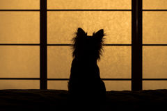 Silhouette of little fluffy dog sitting on the bed Stock Image