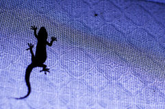 Silhouette of a lizard Stock Photos