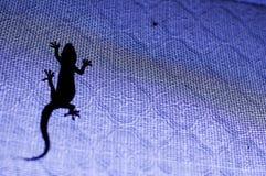 Silhouette of a lizard Stock Photos
