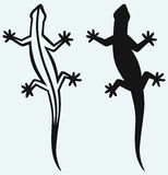 Silhouette lizard Stock Photos