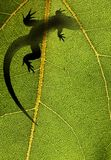Silhouette of a lizard on a leaf back lit Stock Image