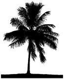 Silhouette of a lone palm Stock Image