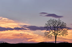 Silhouette of lone tree against the evening cloudy sky Royalty Free Stock Photo