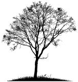 Silhouette of a lone tree Royalty Free Stock Images