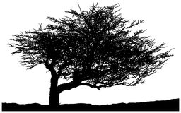 Silhouette of a lone tree Royalty Free Stock Photography
