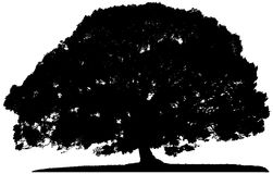 Silhouette of a lone tree stock illustration