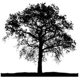 Silhouette of a lone tree Royalty Free Stock Photo