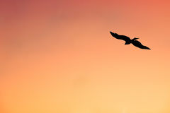 Silhouette of Lonely Eagle Hovering in the Sunset Sky. An eagle hovering in the orange-yellow sunset sky Stock Photo