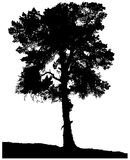 Silhouette of a lonely pine Royalty Free Stock Photography