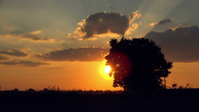 Silhouette of Lonely Solitary Tree in the field at Sunset. Sun rays Through Branches stock footage