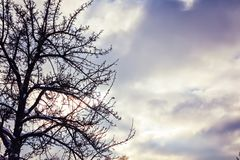 Silhouette lonely tree against of storm cloudy sky. Fall winter autumn atmospheric dramatic sky mindfulness, dark cloud Royalty Free Stock Images