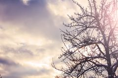 Silhouette lonely tree against of storm cloudy sky. Fall winter autumn atmospheric dramatic sky mindfulness, dark cloud Royalty Free Stock Image