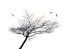 Silhouette of lonely tree and bird isolated Royalty Free Stock Photo