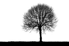 Silhouette of a lonely tree Royalty Free Stock Photo